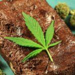 Calculateur de dosage comestible   Puissance   Pétards   Obtenir Weed En Ligne    CANADA
