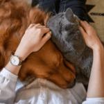 ▷ Dosage de CBD pour animaux de compagnie: un guide